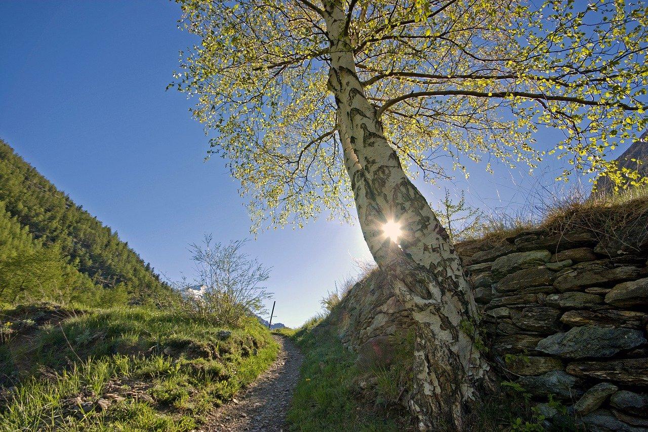 tree, sun, light
